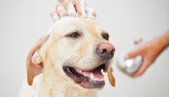 Dog Washing
